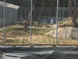 Tiger Gehege im Bau Wildkatzenzentrum