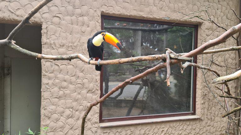 Der Vogelpark Heiligenkirchen ist eine private Einrichtung in dritter Generation. Viele zoologische Besonderheiten, wie der  Riesentukan, finden sich hier.