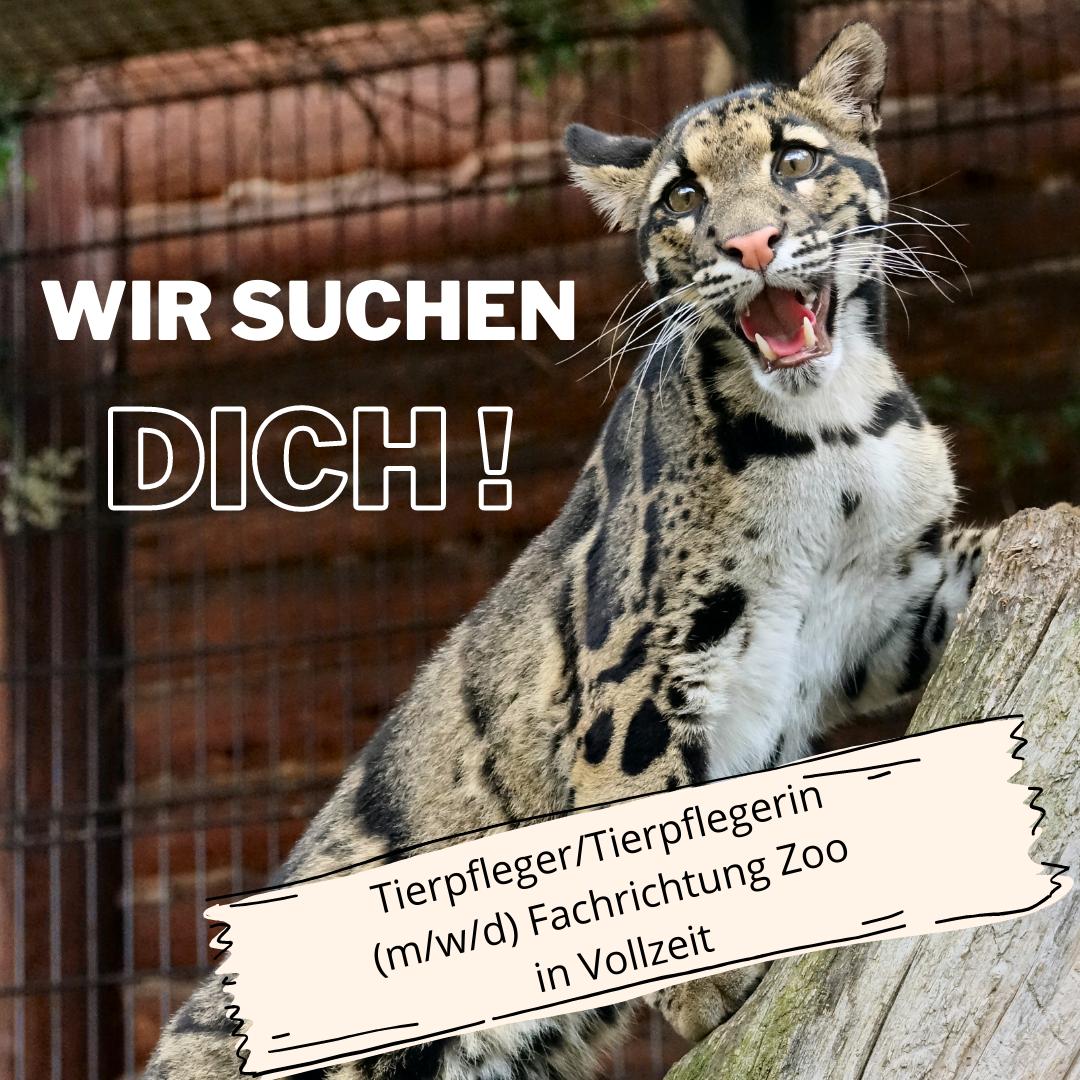 Tierpfleger/Tierpflegerin (m/w/d) Fachrichtung Zoo in Vollzeit gesucht