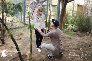 Read more about the article Heiratsantrag im Wildkatzenzentrum