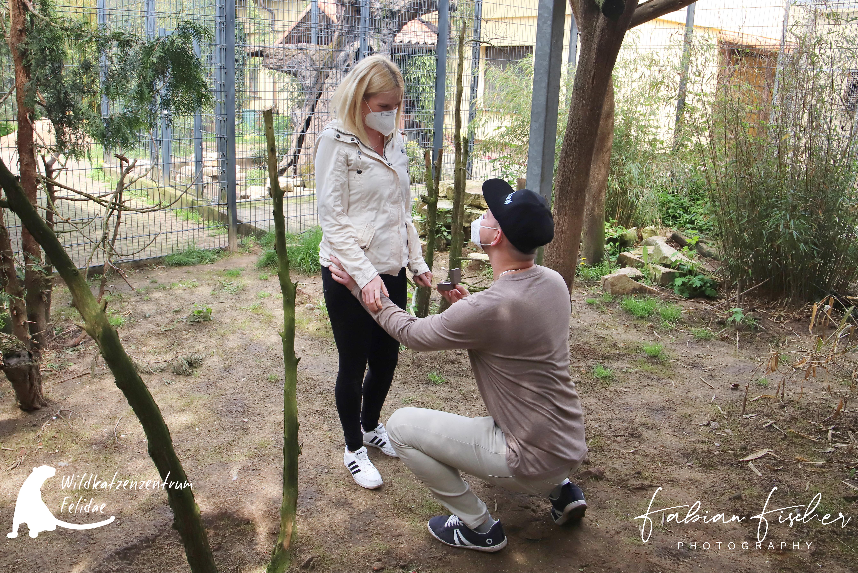 Heiratsantrag im Wildkatzenzentrum