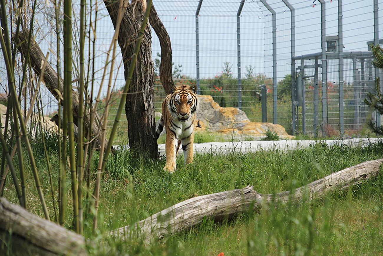 You are currently viewing Tiger Diego und Partnerin Heike haben neue Anlage bezogen